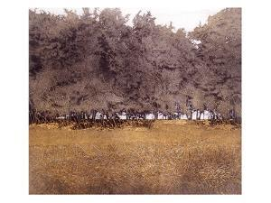 Coppice by Phil Greenwood