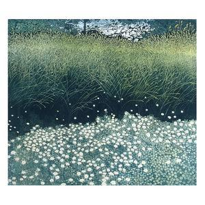 Daisy Lights by Phil Greenwood