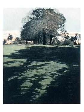 Dusk Shade by Phil Greenwood