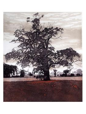 Evening Oak by Phil Greenwood