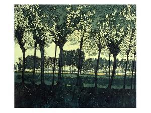 Fence Trees by Phil Greenwood