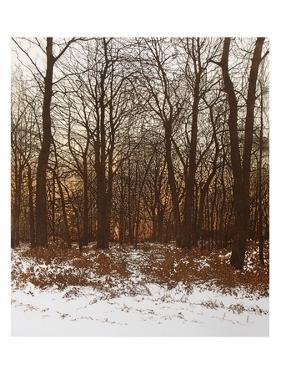 Forest Light by Phil Greenwood