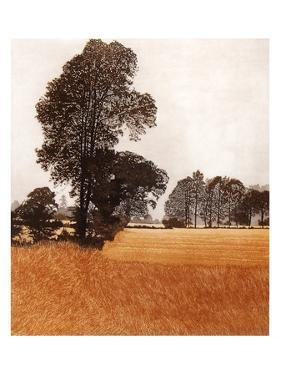 Grass Walk by Phil Greenwood