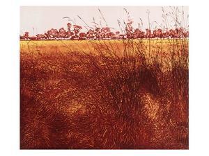 Heath Grass by Phil Greenwood