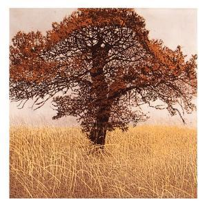 Little Oak by Phil Greenwood