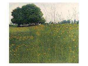 May Grass by Phil Greenwood