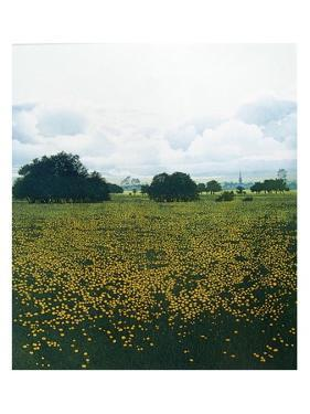 Meadow Gold by Phil Greenwood