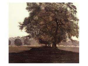 Meadow Haze by Phil Greenwood