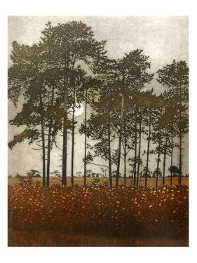 Moonlight by Phil Greenwood
