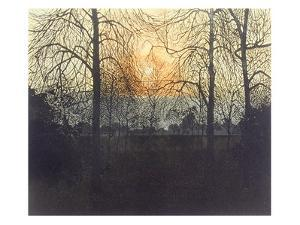 Morning Trees by Phil Greenwood