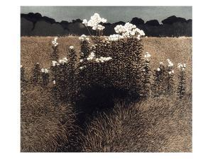 Night Field by Phil Greenwood