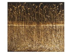 Night Reeds by Phil Greenwood