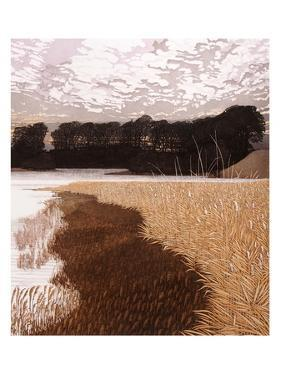 Reed Gold by Phil Greenwood