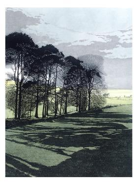 Shadowfield by Phil Greenwood