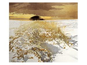 Snow Light by Phil Greenwood