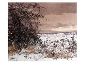 Snow Thorn by Phil Greenwood