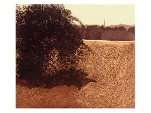 Spring Field by Phil Greenwood