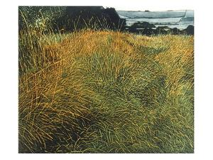 Spring Grass by Phil Greenwood