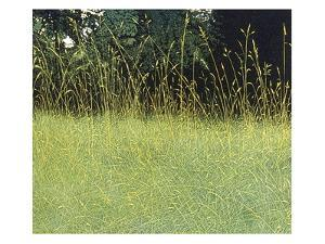 Summer Grass by Phil Greenwood