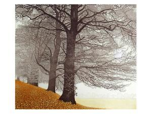 Tree Light by Phil Greenwood