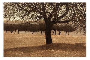 Tree Net II by Phil Greenwood