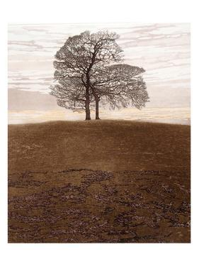 Tree Rise by Phil Greenwood