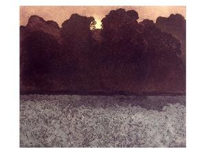 Wood Light by Phil Greenwood