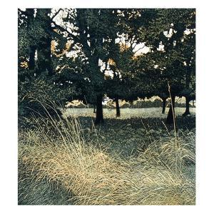 Woodshade by Phil Greenwood