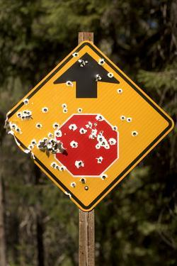 A Stop Sign with Bullet Holes in the Rogue River National Forest by Phil Schermeister