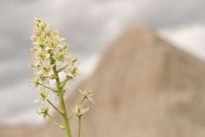 A Wildflower Grows in the Oglala National Grassland by Phil Schermeister