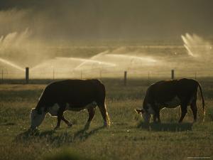 Farm Scene West of Chiloguin, Klamath Falls, Oregon by Phil Schermeister