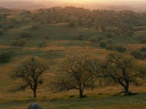 Rolling Foothills of the Sierra Nevada Spotted with Oak Trees near Bakersfield, California by Phil Schermeister