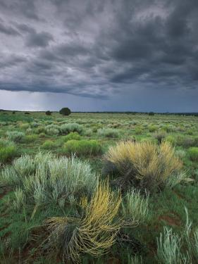Sage and Storm Clouds Near Gallup by Phil Schermeister