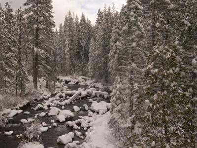 Winter Scene Looking Down the South Fork of the Stanislaus River by Phil Schermeister