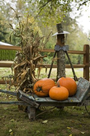 Autumn Harvest II