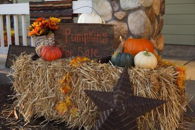 Autumn Harvest IV