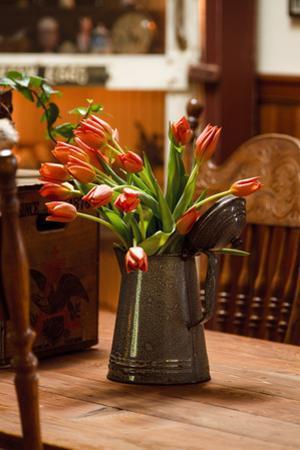Fresh Tulips II