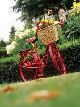Vintage Bicycle II by Philip Clayton-thompson