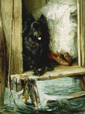 Left in Charge - a Black Pomerain on the Steps of a Bathing Machine by Philip Eustace Stretton