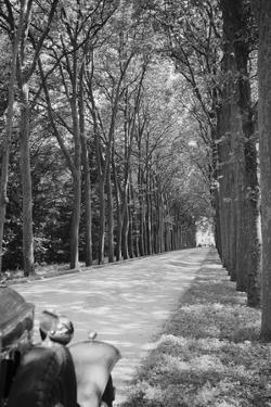 Tree-Lined Entrance Road to French Chateau Chenonceaux by Philip Gendreau