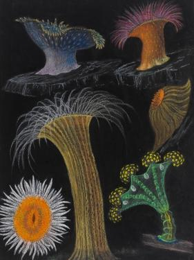 Anemones and Stalked Jellyfish by Philip Henry Gosse