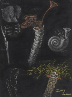 Annelida: Segmented Worms by Philip Henry Gosse