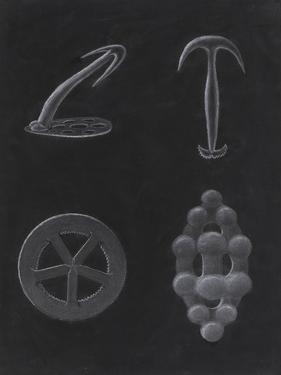 Crustacea by Philip Henry Gosse