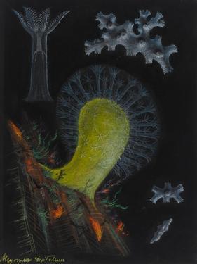 Dead Man's Fingers by Philip Henry Gosse