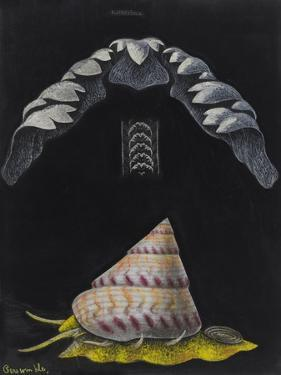Periwinkle: Topshell by Philip Henry Gosse