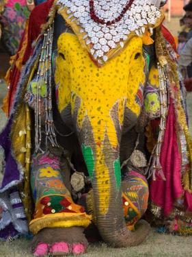 Elephant Festival, Jaipur, Rajasthan, India by Philip Kramer