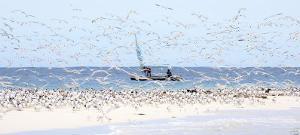 Madagascar Seabirds by Philip Plisson