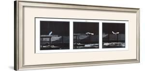 Seabird by Philip Plisson