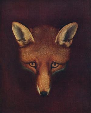 'Renard the Fox', c1800, (1922) by Philip Reinagle