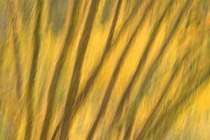 Leaves of an Ocotillo Plant, Fouqueiria Splendus, in Saguaro National Park, Arizona by Philip Schermeister